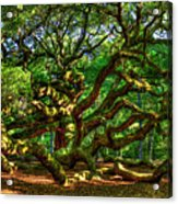 Angel Oak Morning Shadows Charleston South Carolina Acrylic Print