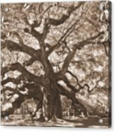 Angel Oak Sepia Acrylic Print