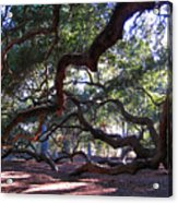 Angel Oak Side View Acrylic Print