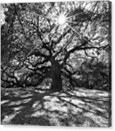 Angel Oak Starbusrt Acrylic Print