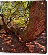 Angel Oak Tree 003 Acrylic Print