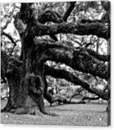 Angel Oak Tree 2009 Black And White Acrylic Print by Louis Dallara