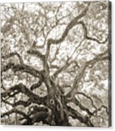 Angel Oak Tree Charleston Sc Acrylic Print