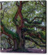 Angel Oak Tree Deeply Rooted History Acrylic Print