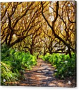 Angel Oaks In Sunshine Acrylic Print