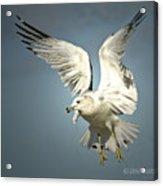 Angel Wings Acrylic Print