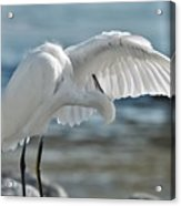 Angel Wings Acrylic Print
