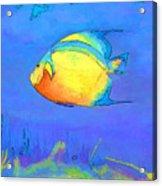 Angelfish Acrylic Print