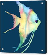 Angelfish I - Solid Background Acrylic Print