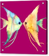 Angelfish Kissing Acrylic Print
