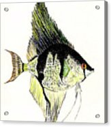 Angelfish Acrylic Print