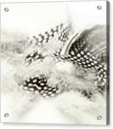 Angelic Message Acrylic Print