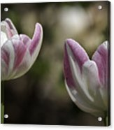 Angelique Peony Tulips 2 Acrylic Print