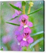 Angelonia Serena 2 Acrylic Print