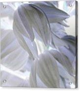 Angels Wings Acrylic Print