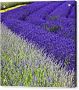 Angles In Lavender Acrylic Print