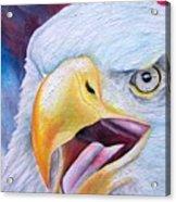 Angry Eagle Acrylic Print