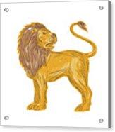 Angry Lion Big Cat Roaring Drawing Acrylic Print