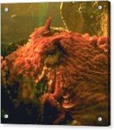 Angry Octopus Acrylic Print