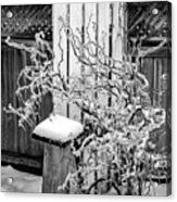 Angry Plant Bw Acrylic Print