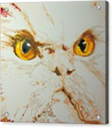 Angry Cat. Acrylic Print