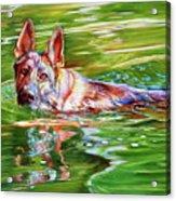 Angus Acrylic Print