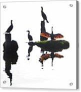 Anhingas Sunning Acrylic Print