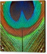 Animal - Bird - Peacock Feather Acrylic Print