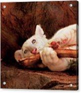 Animal - Cat - My Chew Toy Acrylic Print