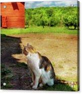 Animal - Cat - The Mouser Acrylic Print