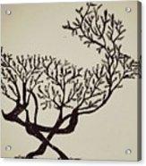 Animal Drawing Acrylic Print