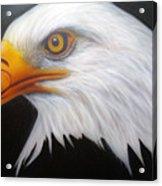Animal- Eagle Acrylic Print