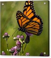 Animal Life 5189 Acrylic Print