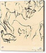 Animal Studies (verschiedene Tierstudien) Acrylic Print