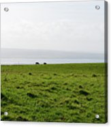 Animals Grazing In A Field Along The Cliffs Of Moher Acrylic Print