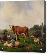 Animals Grazing In A Meadow  Acrylic Print by Hendrikus van de Sende Baachyssun