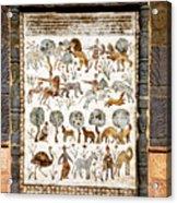 Animals Past And Present Acrylic Print