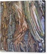Ankor Temple Trees  Acrylic Print