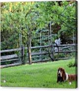 Annie In Her Yard Acrylic Print