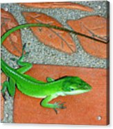 Anole On Chair Tiles Acrylic Print