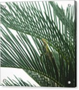 Anole With Palm - Entangled Acrylic Print