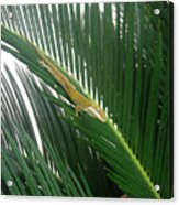Anole With Palm - Inquisitive Acrylic Print