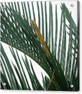 Anole With Palm - Looking Up Acrylic Print