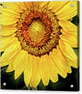 Another Artistic Sunflower Acrylic Print