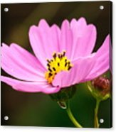 Another Cosmos Acrylic Print