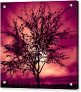 Another Day Acrylic Print