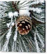 Another Frosty Pine Cone Acrylic Print