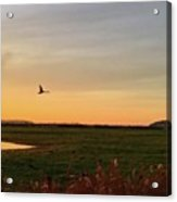 Another Iphone Shot Of The Swan Flying Acrylic Print