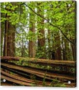Another Split Redwood Acrylic Print