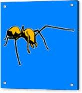 Ant Graphic  Acrylic Print